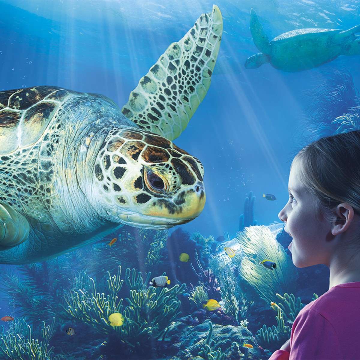 2014_SEALIFE_Green Sea Turtle_LS_RGB